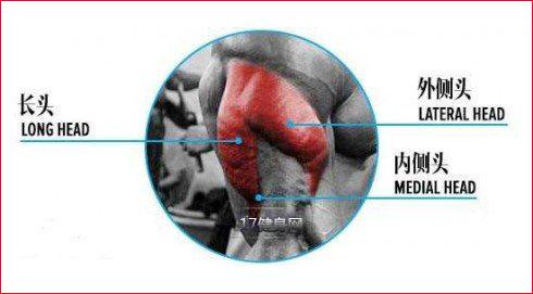 打破肱三头肌的磨炼要领-追梦健身网