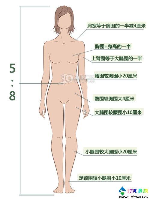 好身材的规范一看图便知-追梦健身网