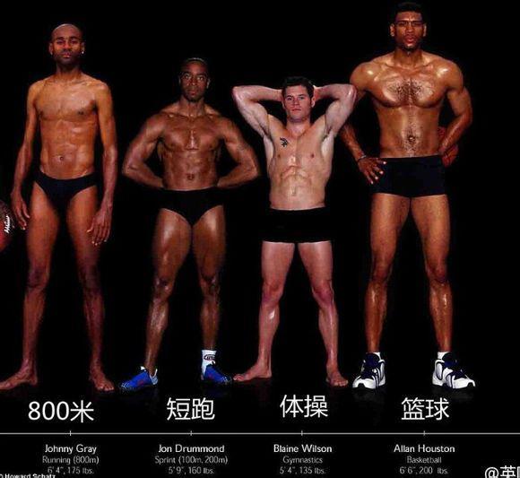 跑步、体操、篮球运动员肌肉比较